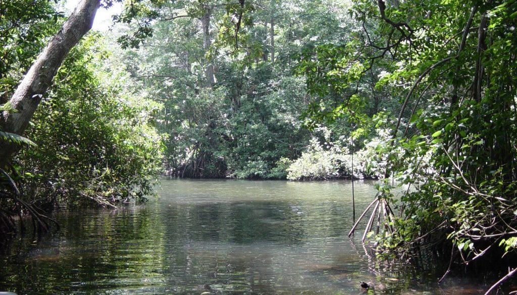 Mangrove Canals at Cuero y Salada Wildliife Reserve