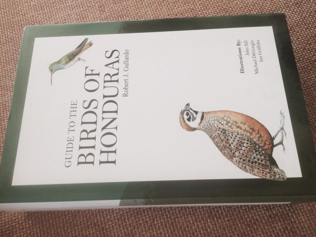 Honduras birding