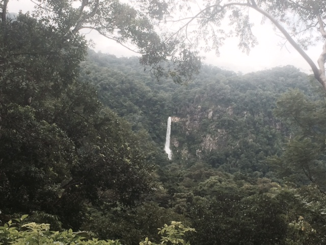 The Sounds of the Rainforest