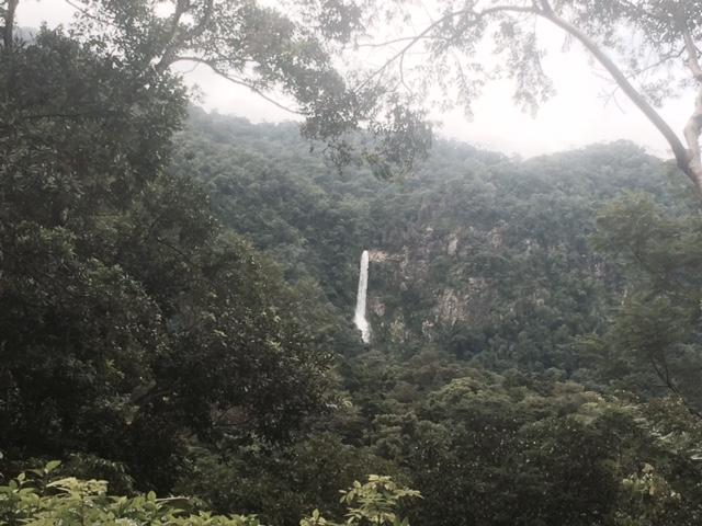 El Mapache Trail